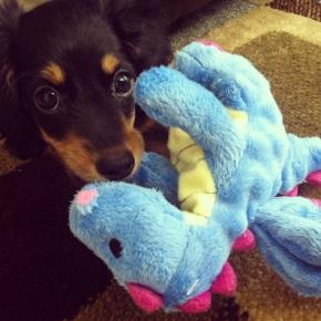 One Fluffy Puppy